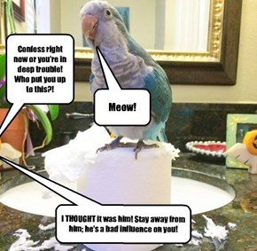 My parrot is a stool pigeon!