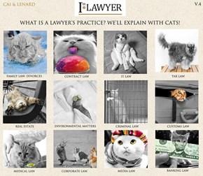 CAT'S RULE!