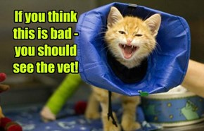 If you think this is bad - you should see the vet!