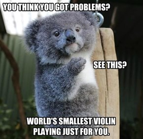 Your Problems are Un-Koala-fied