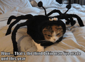 Spider Kitty Goes Three for Three This Halloween
