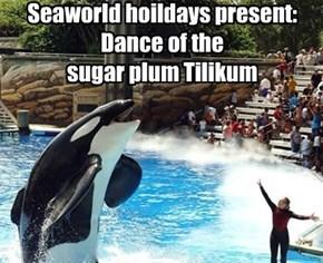 Seaworld hoildays present: Dance of the  sugar plum Tilikum