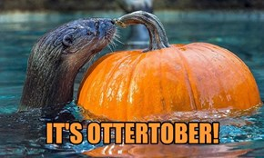 Otterween Is Just Around the Corner