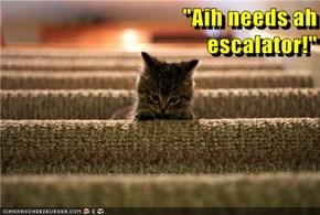 """""""Aih needs ah                                                     escalator!"""""""
