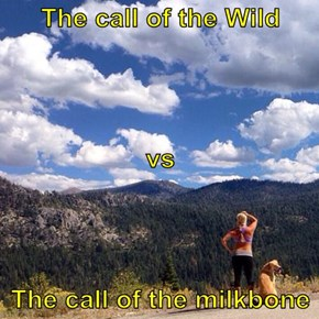The call of the Wild vs The call of the milkbone