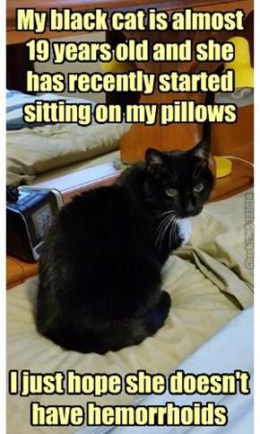 I can haz soft seat?