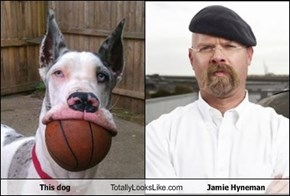 This dog Totally Looks Like Jamie Hyneman