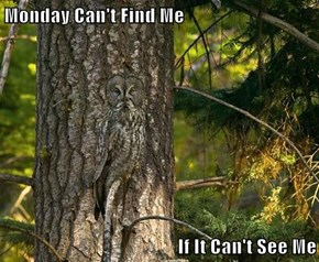 Monday Can't Find Me  If It Can't See Me