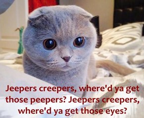 Jeepers creepers, where'd ya get those peepers? Jeepers creepers, where'd ya get those eyes?