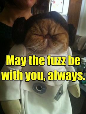 The Fuzz, it Surrounds Us