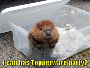 I can has Tupperware party?