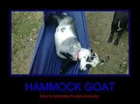HAMMOCK GOAT