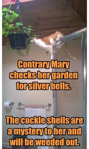 Mary, teh baffroom cat.