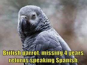 British parrot, missing 4 years, returns speaking Spanish.