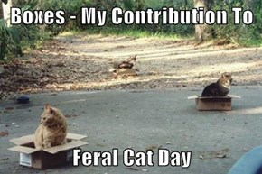 Boxes - My Contribution To   Feral Cat Day
