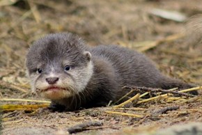 Mondays Aren't This Adorable Otter's Favorite Either