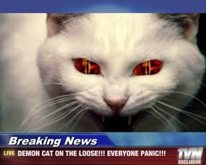 Breaking News - DEMON CAT ON THE LOOSE!!! EVERYONE PANIC!!!