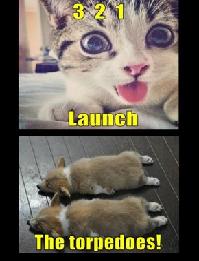 With A Maniacal Laugh, Captain Kitteh Released The Corgies