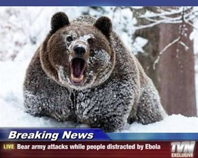 Breaking News - Bear army attacks while people distracted by Ebola