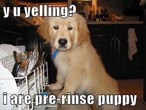 y u yelling?  i are pre-rinse puppy