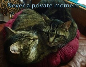 Never a private moment