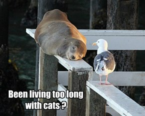 Monorail Seal