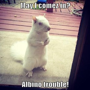 May I comez in?  Albino trouble!