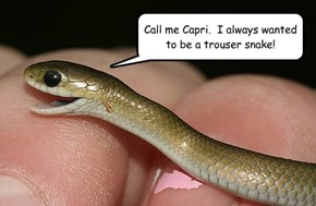The Reason Snakes Hiss?  They Can't Facepalm at Bad Jokes