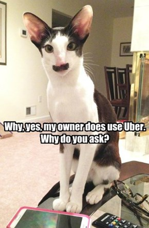 Why, yes, my owner does use Uber.  Why do you ask?