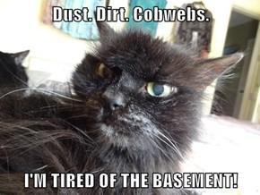 Dust. Dirt. Cobwebs.  I'M TIRED OF THE BASEMENT!