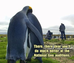 There,  there  dear  you'll  do  much  better  at  the  National  Geo  auditions.