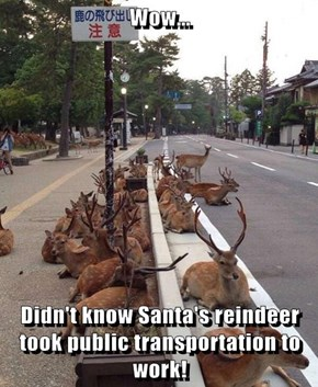 Wow...  Didn't know Santa's reindeer took public transportation to work!