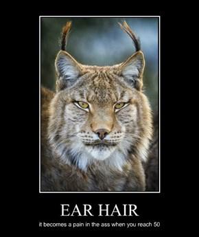 EAR HAIR