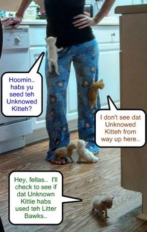 Deze Ittie Bitties join in teh search for teh Unknowed Kitteh..