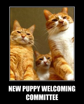 NEW PUPPY WELCOMING COMMITTEE