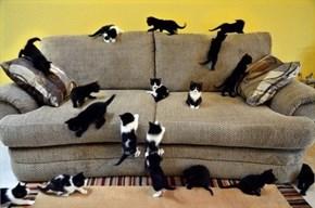 It's a Cute Caturday Takeover!