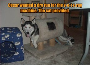 Cesar wanted a dry run for the v-e-t x-ray machine. The cat provided.