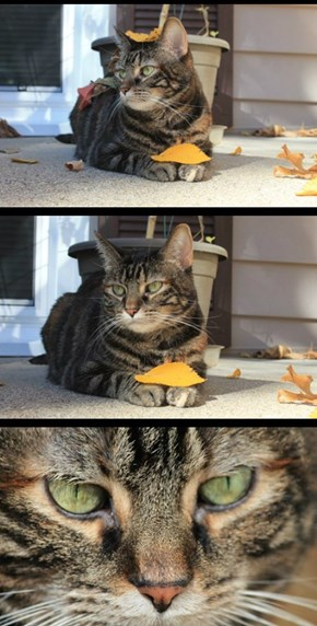 My Cat Hates Me for putting Leaves on Her.