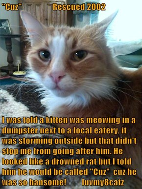 """Cuz""                  Rescued 2002  I was told a kitten was meowing in a dumpster next to a local eatery, it was storming outside but that didn't stop me from going after him. He looked like a drowned rat but I told him he would be called ""Cuz""  cuz he w"