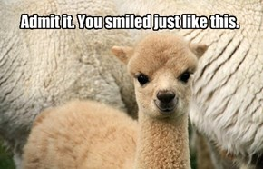 Admit it. You smiled just like this.
