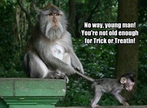 No way, young man! You're not old enough for Trick or Treatin!