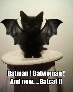 Batman ! Batwoman ! And now.....Batcat !!