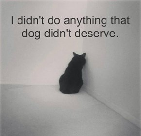 I didn't do anything that dog didn't deserve.