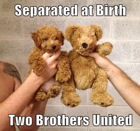 Separated at Birth   Two Brothers United