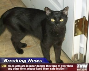 Breaking News - black cats are in moar danger this time of year than eny other time. please keep them safe inside!!!!