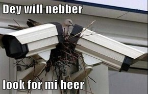 Dey will nebber  look for mi heer