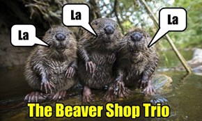 The Beaver Shop Trio