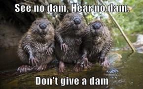 See no dam. Hear no dam.  Don't give a dam