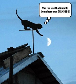 I think I need a new weathervane.