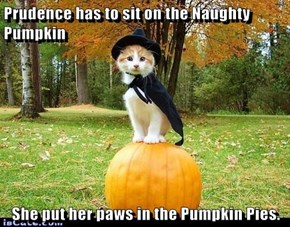Prudence has to sit on the Naughty Pumpkin  She put her paws in the Pumpkin Pies.